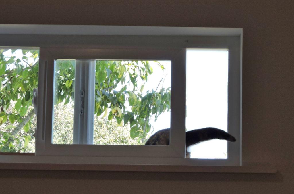 kitty cat using window cat door