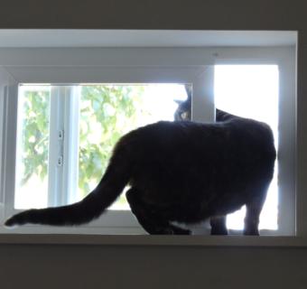 The Best Cat Door Ever!