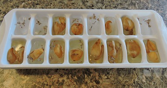 example of brown unappetizing ice cubes