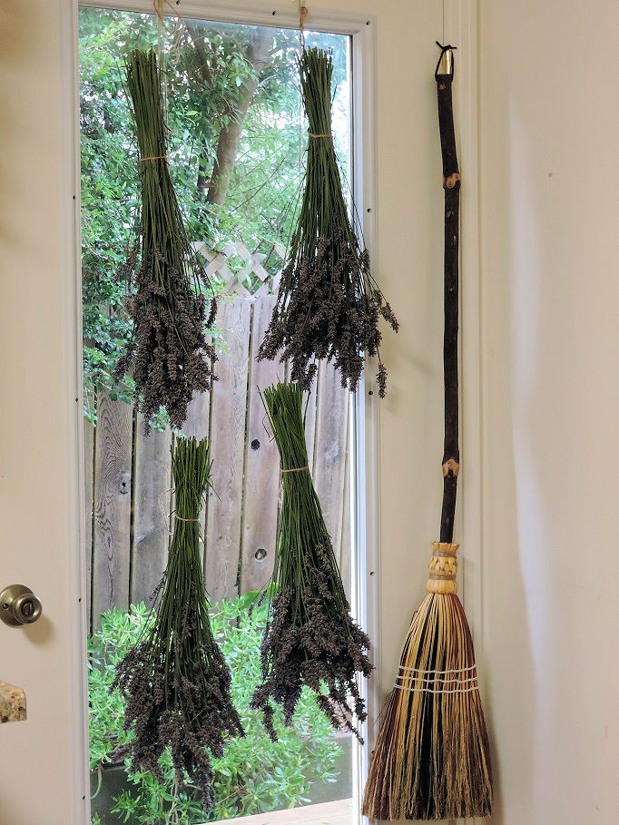 Bunches of lavender hanging with twine to dry