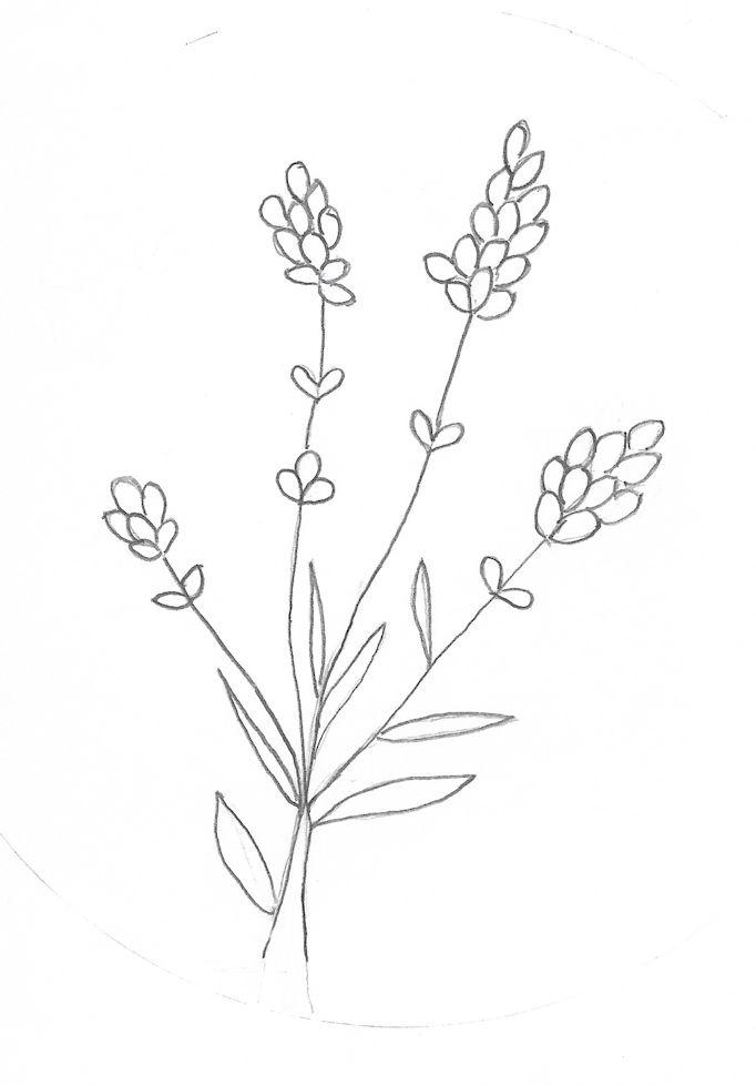 outline sketch of lavender