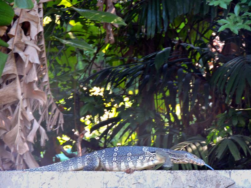 close up of monitor lizard
