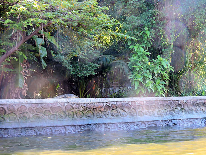 monitor lizard on the bank of canal