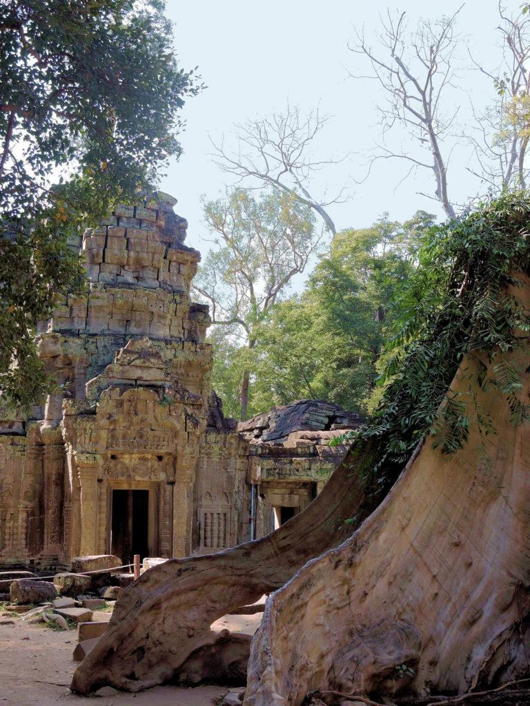 angkor ruins and trees