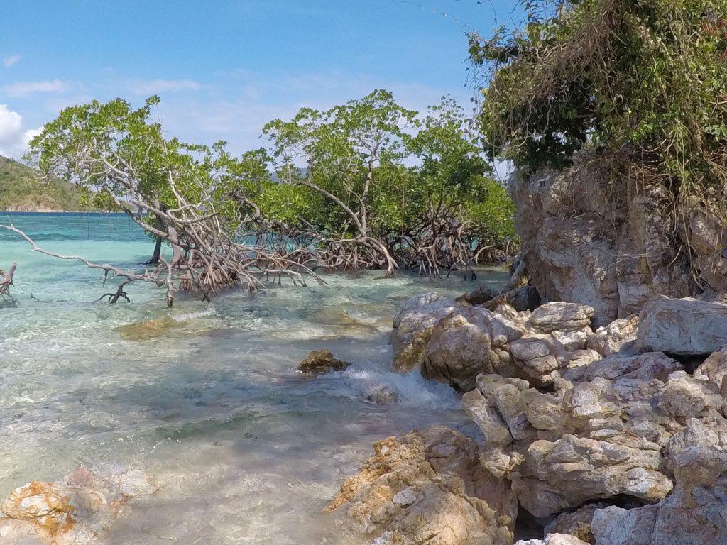 rocky mangrove beach clear blue water at cyc beach