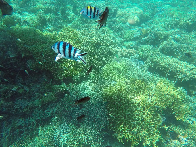 fishes and coral snorkling