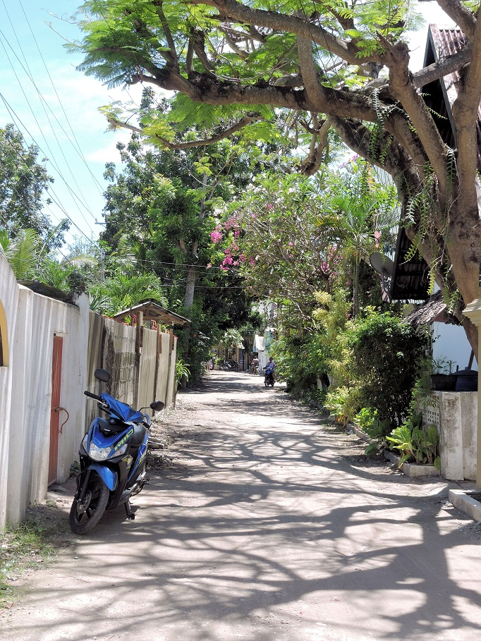 street with trees moalboal