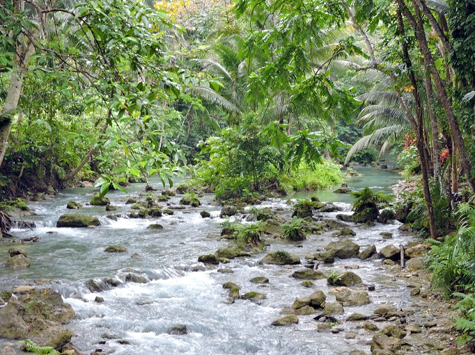 river running along trail to Kawasan falls lush jungle trees