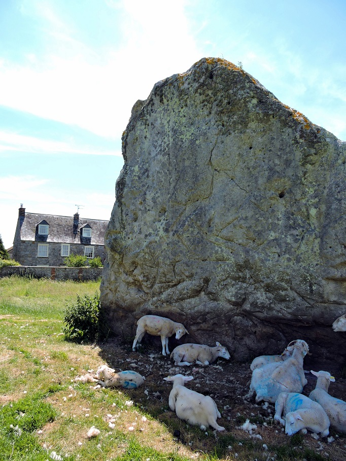 one very large stone with sheep and stone house