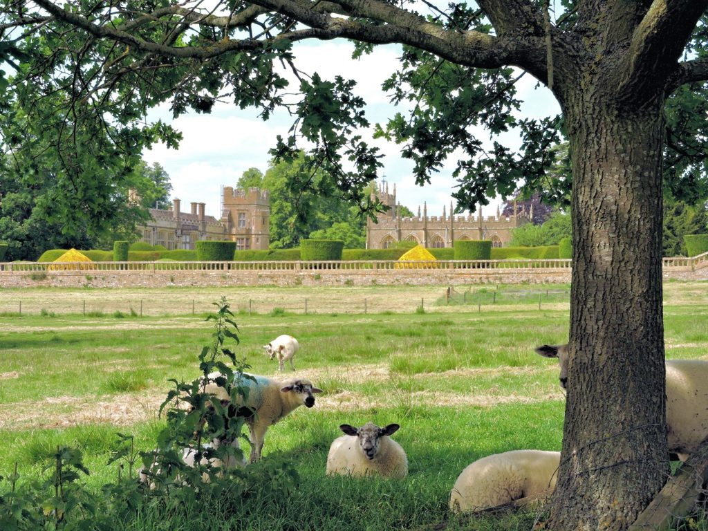 cotswolds castle view with sheep