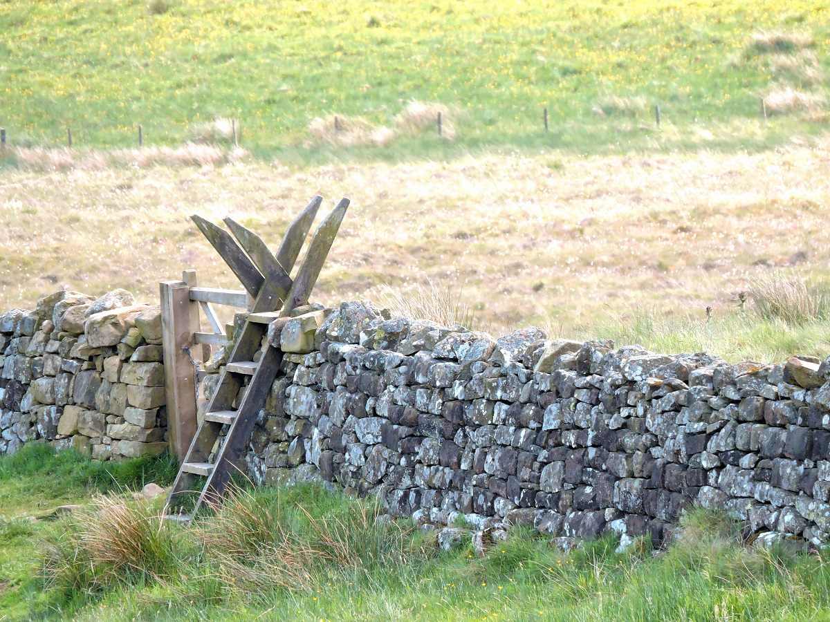 wooden-ladder-over-rock-wall